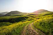 Dirt Road Through the Rolling Hills of San Luis Obispo