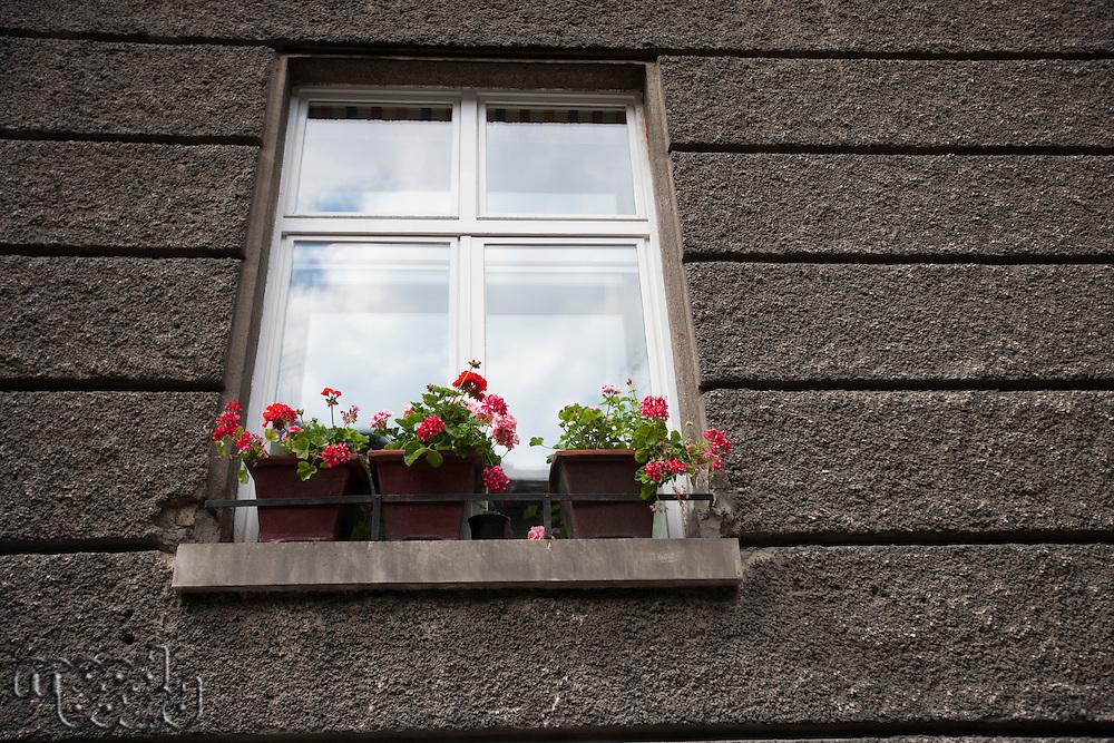 Flower pots at window sill