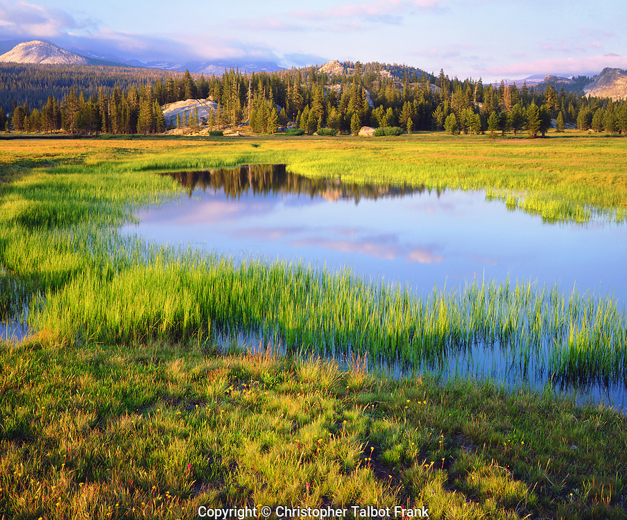 I set up my 4x5 view camera to take this photo of the lush green Tuolumne Meadows in Yosemite National Park.  This scenic alpine meadow landscape shows the High Sierra reflecting in a tarn.