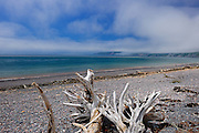Driftwood on rocky beach of the Bay of Fundy<br /> Advocate Harbour<br /> Nova Scotia<br /> Canada