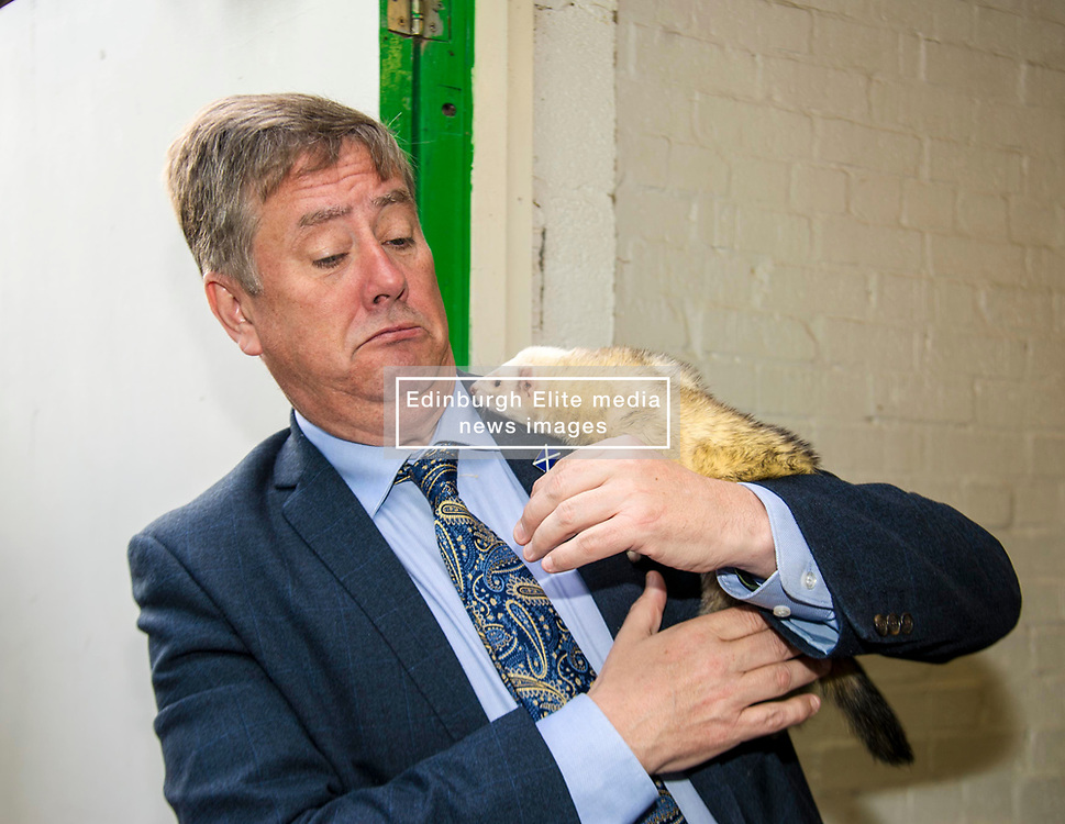 Pictured: Keith Brown and Edgar the Ferret<br /> <br /> Cabinet Secretary for Economy, Jobs & Fair Work Keith Brown visited Gorgie City Farm today  to mark their accreditation as the 800th Living Wage employer in Scotland. Mr Brown met Josiah Lockhart, CEO and undertook a short tour of the farm, celebrating their accreditation and promoting the Living Wage more generally. The Scottish Government has set a target of reaching 1,000 Scottish-based Living Wage Accredited Employers by autumn 2017. While at the farm Mr Brown met Maia Gordon, Kirsty McGoff (17) and Zoe White (18), who have benefited from the living wage, and George Ellis, chair of the farm's board of directors<br /> Ger Harley | EEm 18 May 2017