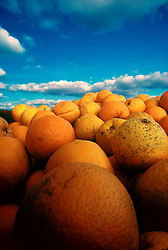 Stock photo of a mound of fresh oranges