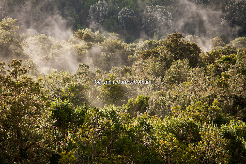 Steam rises through the trees of the sunken forest on the Rio Maullin in Senda Nativa Romahue, a nature preserve near Puerto Varas, Chile.