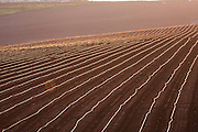 A plowed field, with plastic Irrigation pipes, israel
