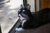 Domestic Cats -- Tuxedo Cats to Tabbies