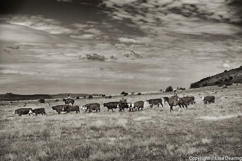 Fall Gather, 06 Ranch, West Texas