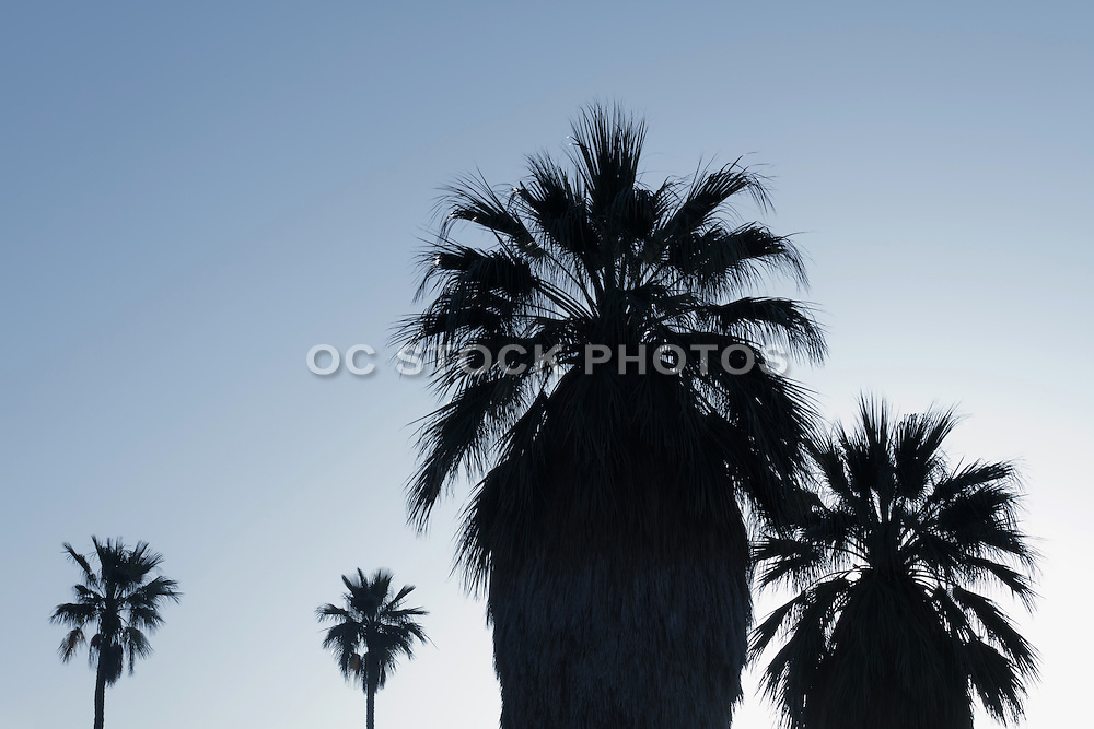 Palm Tree Silhouette in Southern California