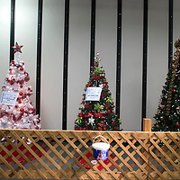 Soroptimist International hosts its annual Festival of Trees at the Rio West Mall in Gallup Thursday. The trees are decorated and donated by local businesses and will be auctioned off Saturday night. Several of the trees come with additional gifts.