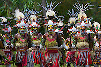 "Villagers at Payakona Village in a traditional singsing ceremony put on as part of a ""compensation"".  Feathers of multiple species of Birds of Paradise adorn their headdresses, which are famiy heirlooms.  Traditional use of feathers such as this continues in New Guinea."