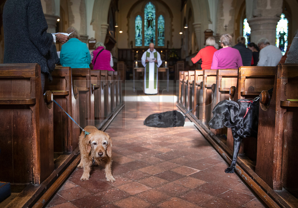 © Licensed to London News Pictures. 06/10/2019. Selsey, UK. Dogs and their owners take part in the annual Service of Blessing of Animals at St Peter's Church in Selsey, West Sussex. Parishioners bring their pets to the church for the annual service after earlier attending a Harvest Festival celebration. Photo credit: Peter Macdiarmid/LNP