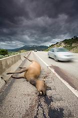 Roads / Highways