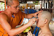 28 JUNE 2011 - CHIANG MAI, THAILAND: A senior monk shaves the eyebrows of a man being ordained as a Buddhist monk at Wat Phrathat Doi Saket a large temple complex in Chiang Mai, Thailand. The temple at Doi Saket is said to have been built in the year 1112, but it has been renovated several times since then. Most Thai males enter the Buddhist clergy, called the Sangha, at least once in their lives. Their stay in the monastery can be as short as one week or a lifetime committment, depending on the man.     PHOTO BY JACK KURTZ