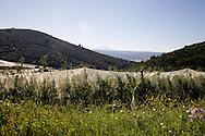 manosque area landscape   /  paysage des collines autour de Manosque, ou se trouve les mines de stockage souterrain de stockage de gaz naturel en cavite saline.  /