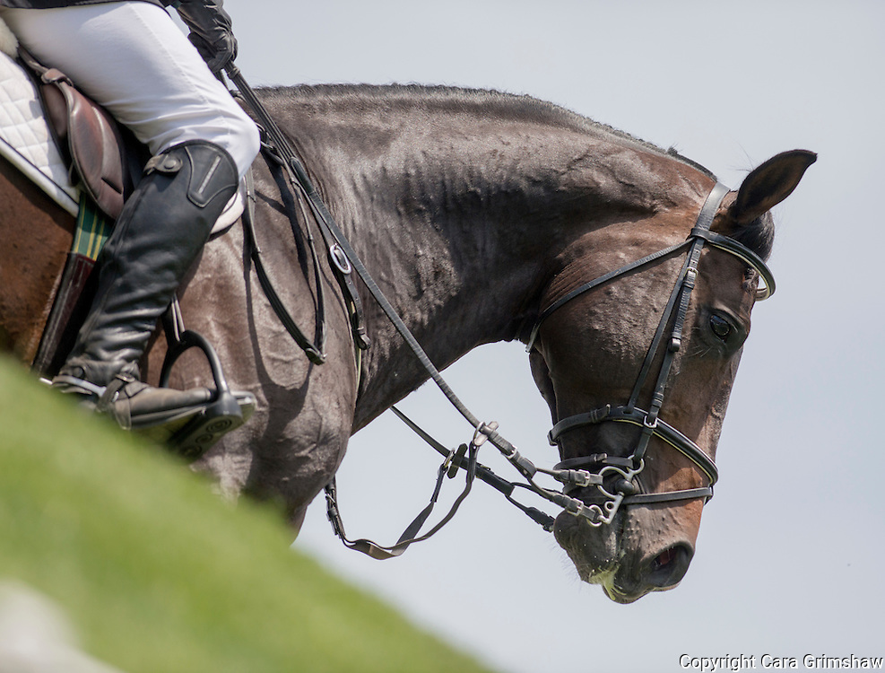DANIEL PEDRAZA (MEX) rides ARC DE TRIOMPHE in from the 1.50m Derby Nexen Cup during National CSI 5* at Spruce Meadows presented by Rolex, June 7 2015. Calgary.