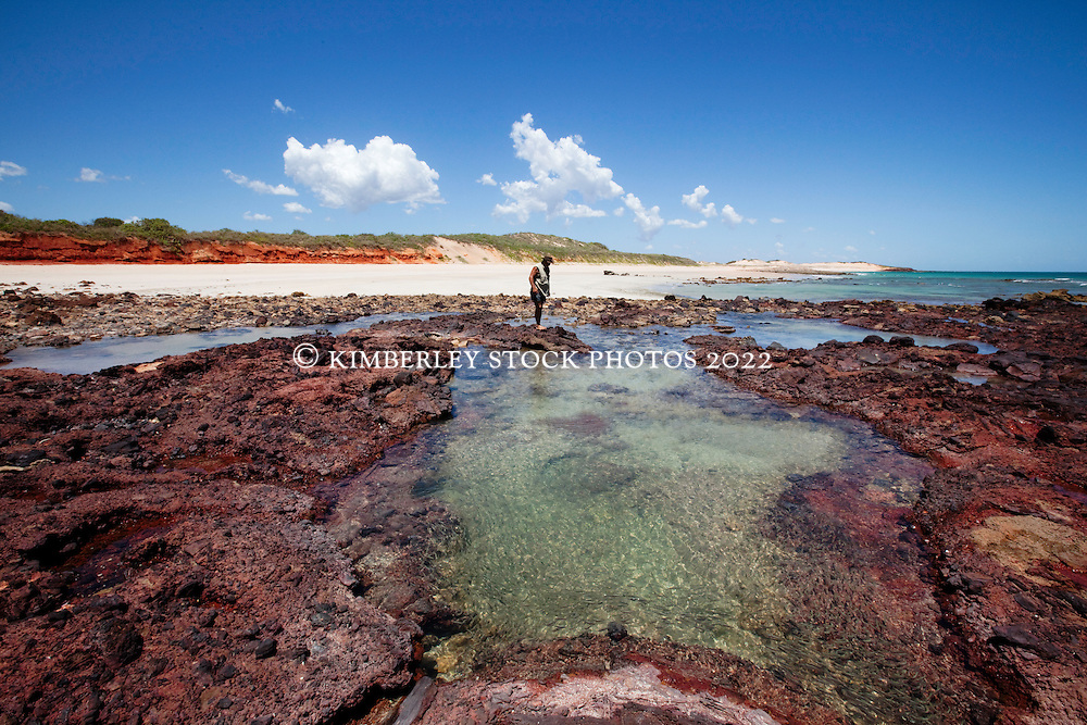 Naturalist Richard Costin explores the rockpools just to the south of Quandong Point on the Dampier Peninsular.  Quandong Point is near the site of the proposed LNG gas precinct.  Small fish fill the rockpools and the area is rich in marine life.