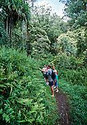 Hiking, Keanae Arboretum, Hana Coast, Maui, Hawaii