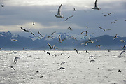 Birds, Sitka, Alaska<br />