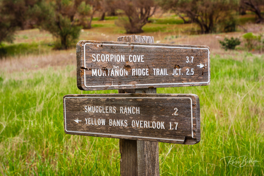 Olive trees and trail sign at Smugglers Cove, Santa Cruz island, Channel Islands National Park, California USA