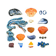 Blue Mussel (Mytilus edulis), fishing rope, beach stone (might be rhyolite), Green Crabs (Carcinus maenas), china fragment, lobster-claw bands, Common Periwinkles (Littorina littorea).