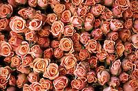 1998, Amsterdam, Netherlands --- red roses in a market --- Image by © Owen Franken/CORBIS