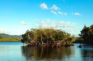 Mangroves near the shore of village Lutes. Uleveo, Maskelyne Island, Malampa Province, Malekula, Vanuatu