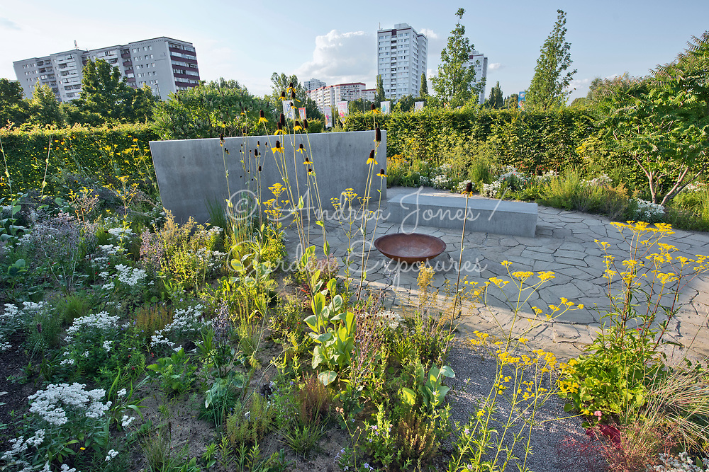 Border in foreground including Rudbeckia maxima (great coneflower), Patrinia scabiosifolia (Golden valerian, Golden lace), Anaphalis triplinervis and Eryngium planum 'Blaukappe' (sea holly 'Blaukappe'). <br /> <br /> Concrete wall and bed represents a house, rusted iron bowl represents furniture whilst the stone paving is the floor of a previous house.<br /> <br /> Carpinus betulus (hornbeam) hedge with border including Rhus typhina (Stag's horn sumach) in background.<br /> <br /> IGA Berlin 2017, 'The Garden of Vulcan'<br /> Design: Tom Stuart-Smith Ltd