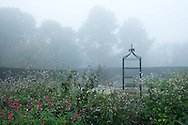 An autumn border on a foggy day in the Savill Garden, Windsor Great Park, Surrey, UK