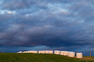 Goshen, New York - Wrapped bales of hay are lined up in a field on a dairy farm at sunset on  April 27, 2014.