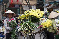 A street vendor selling yellow chrysanthemums, roses and lilies for the Tet holiday in the Old Quarter, Hanoi, Vietnam, Southeast Asia