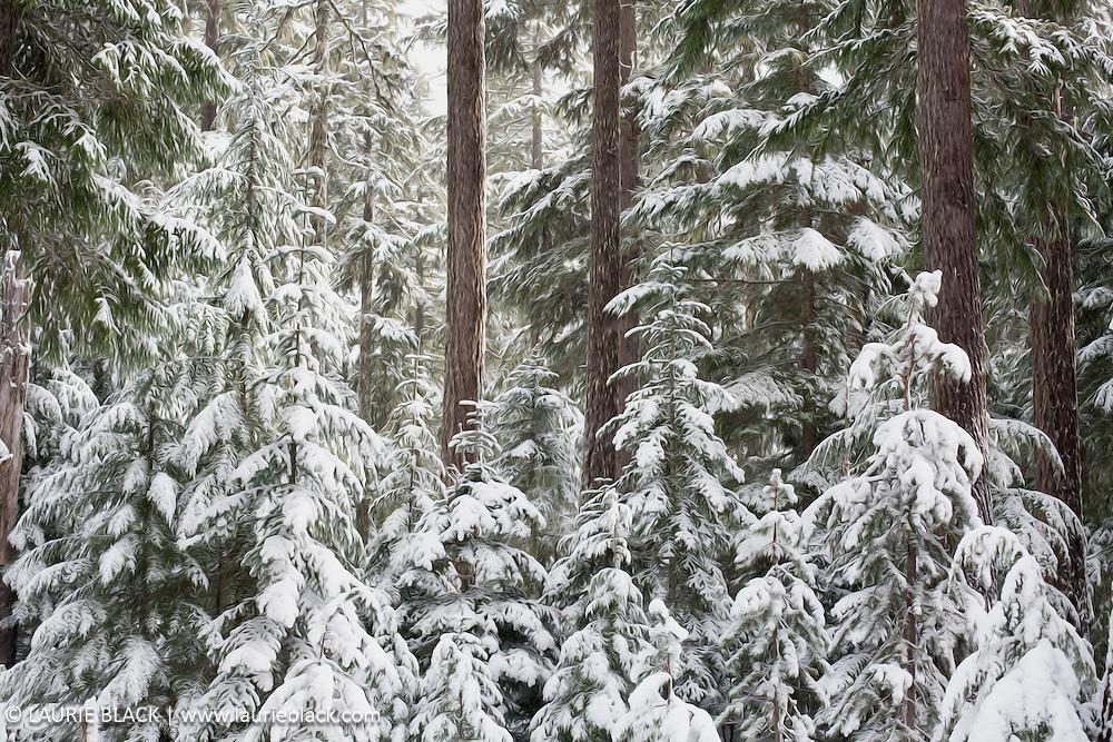 Winter trees landscape - digitally stylized