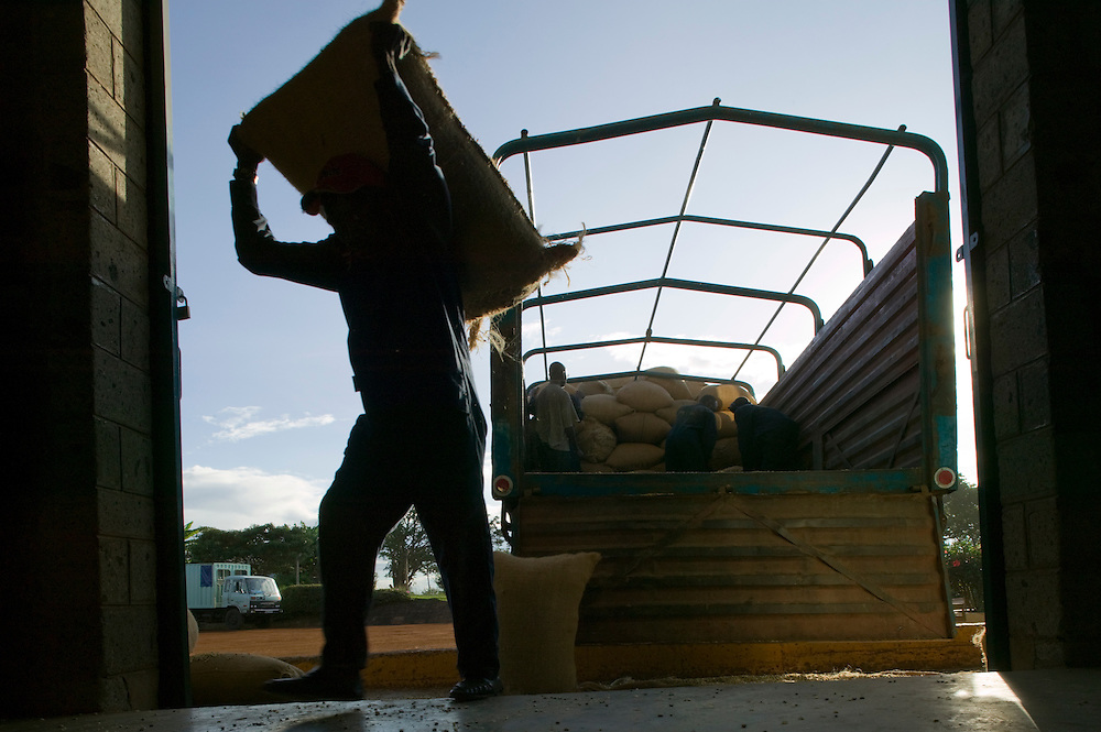 Africa, Kenya, Ruira, Silhouette of workman carrying burlap bags of freshly picked Arabica coffee beans inside sorting facility  Socfinaf's Oakland Estates coffee plantation