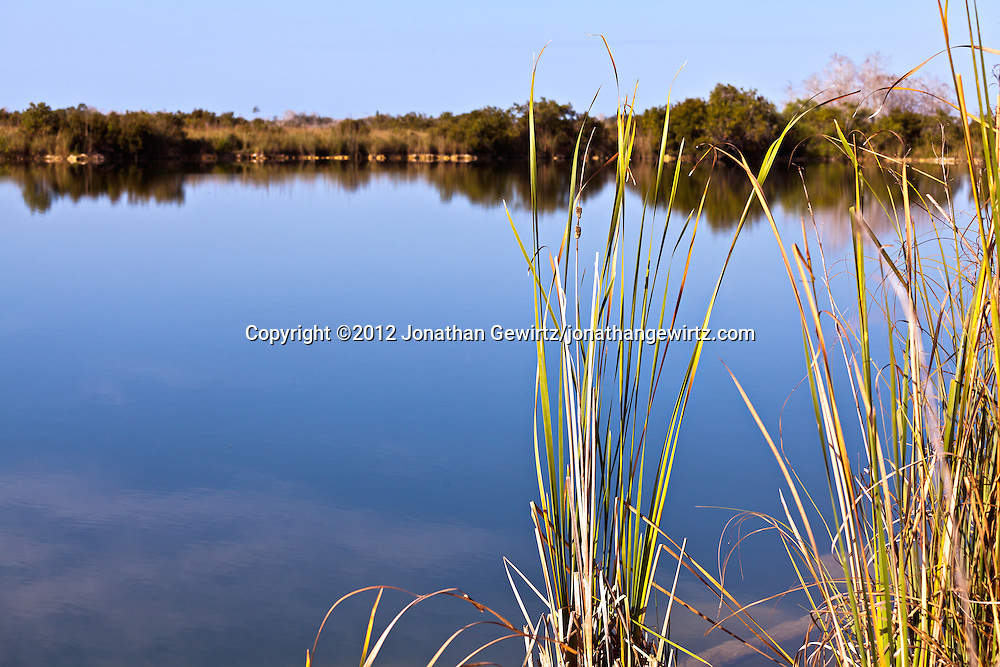 Reeds on the edge of a tranquil pond in Everglades National Park, Florida. WATERMARKS WILL NOT APPEAR ON PRINTS OR LICENSED IMAGES.