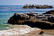Pelicans Sitting On Rocks In The Ocean In Laguna Beach California