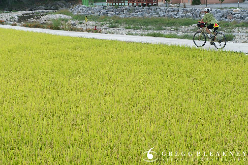 Rice Paddy, South Korea