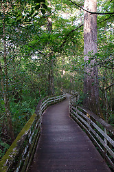 Boardwalk at Corkscrew Swamp Sanctuary, Naples, Florida, US