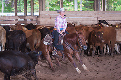 September 24, 2017 - Minshall Farm Cutting 6, held at Minshall Farms, Hillsburgh Ontario. The event was put on by the Ontario Cutting Horse Association. Riding in the $1,000 Amateur Class is Katie Leung on Missancattin owned by the rider.