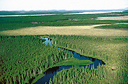 A river runs through low-lying pine forest and wetland.