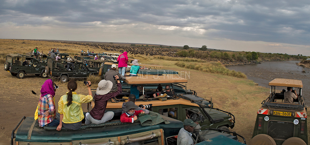 Toursist wait for a large heard of wildebeests to cross the Mara River, Kenya, in July 2013.