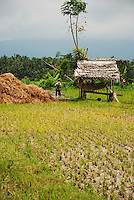 A rural scene of a man working in a field on Bali, Indonesia.