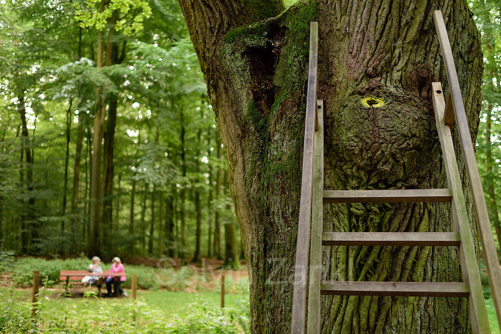 Bridegroom's Oak is an oak tree in the forest near Eutin in Schleswig-Holstein, Germany. A hole high in the trunk, reached by a ladder, functions as a public letter box for people seeking love partners, and has a postal address. Eutin, Germany | Bräutigamseiche
