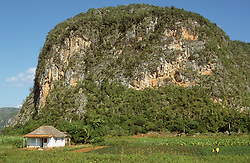 Landscape at Vinales; Cuba; showing a typical mogote or limestone formation,