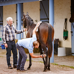 Inspections Osarus yearling sale 07/09/2017 photo: Zuzanna Lupa