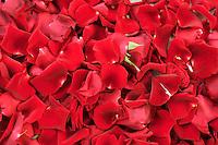 27 May 2005, Paris, France --- Red Roses in Paris --- Image by © Owen Franken/Corbis