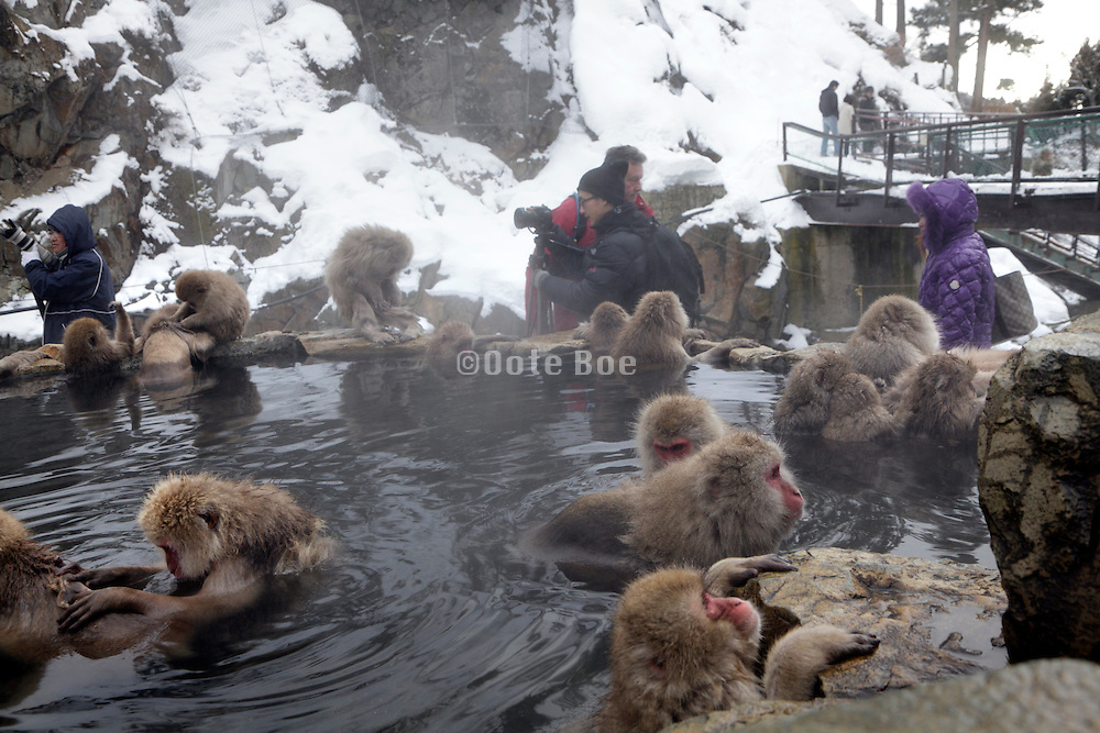 Snow Monkeys and people in Jigokudani Monkey Park Nagano Prefecture Japan