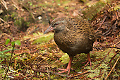 Weka Pictures - Photos