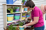 63821-203.01 Woman at potting bench with containers and flowers in spring, Marion Co. IL