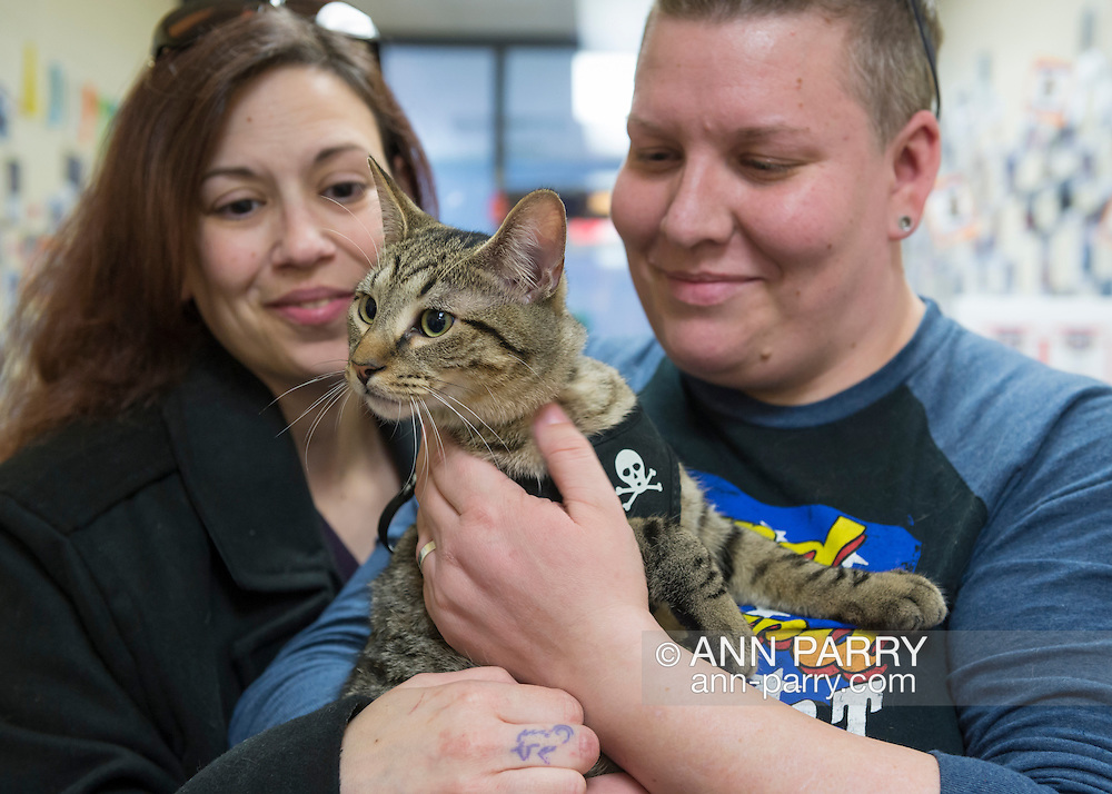 Wantagh, New York, USA. February 7, 2016. Tiger the tabby cat, one of the team players in the Hallmark Channel Kitten Bowl III, is with his new family, CHARLIE BROWN, who's holding the star whose new name is Yogi, and MELANIE BENEDETTO, of Massapequa, at Last Hope Animal Rescue's Open House, where the adoption center's volunteers and visitors watch the game on TV and cheer on their team, the Last Hope Lions. Over 100 adoptable kittens from Last Hope Inc and North Shore Animal League America participated in the taped games, and the Home and Family Felines won the 2016 championship, which first aired the day of Super Bowl 50.