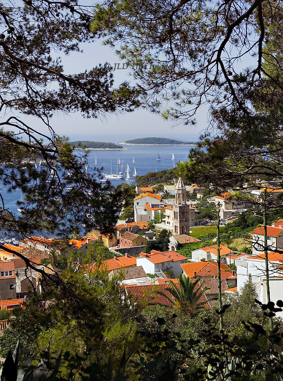 View of Hvar and Pakleni Islands in the Adriatic Sea through a screen and framing of pine branches above the town.