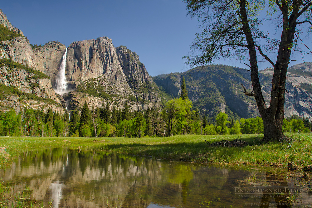 Upper Yosemite Falls reflected in flooded meadow pool, Yosemite Valley, Yosemite National Park, California