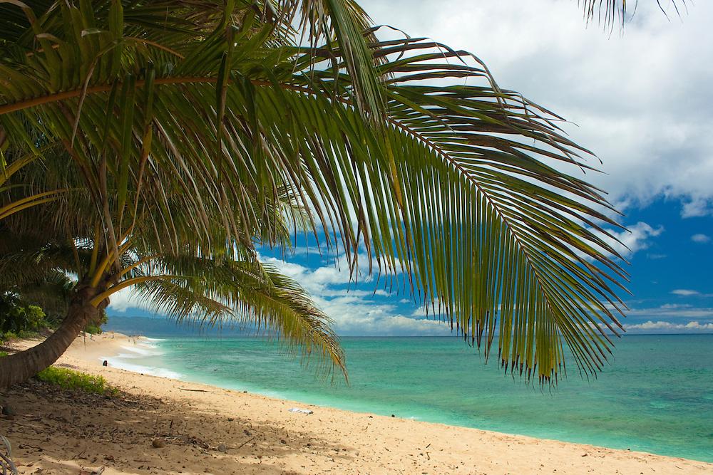 Palm tree and tropical beach, Hawaii